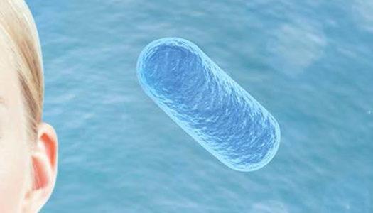 Probióticos: Antibacterianos y fungicidas en la piel
